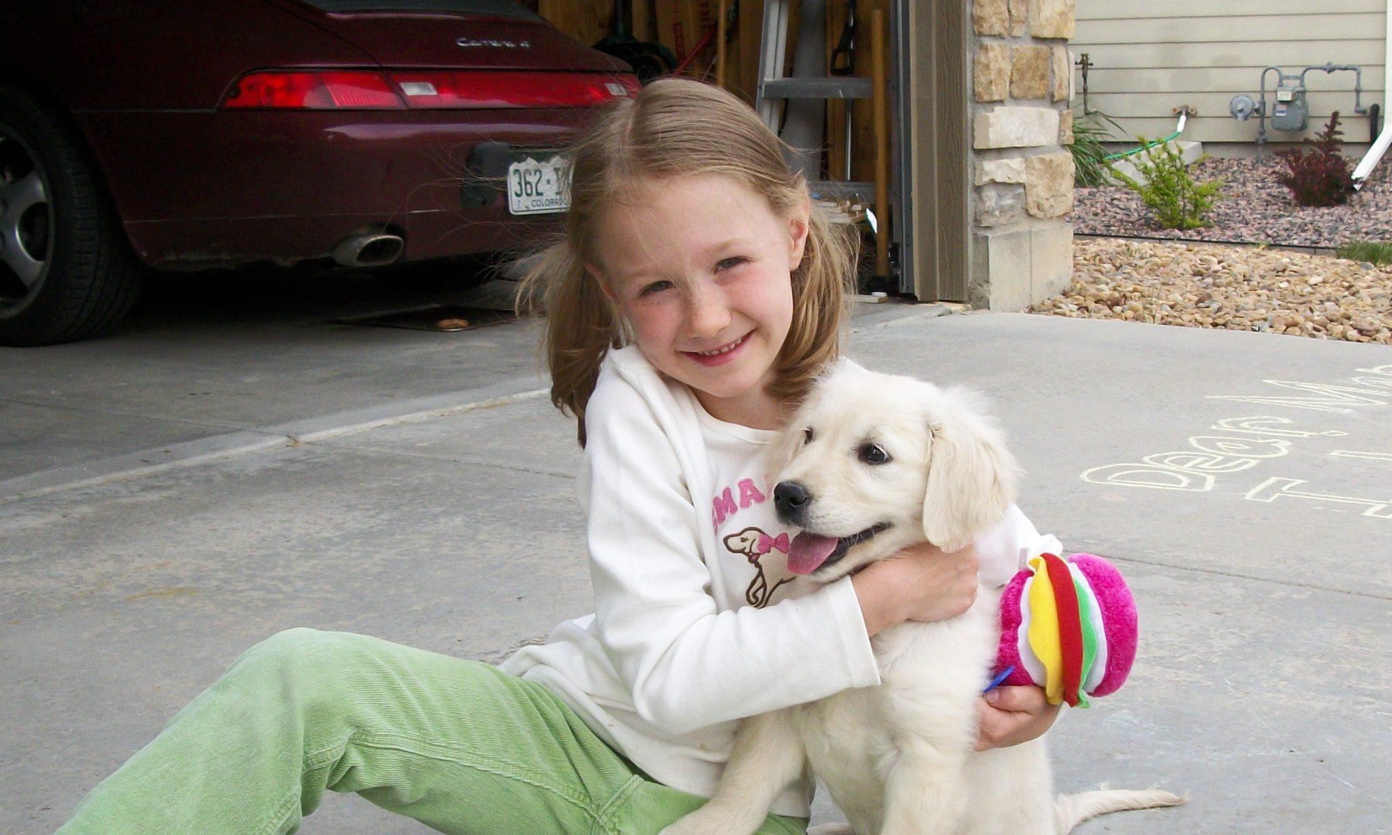 English Cream Golden Retriever Puppies Golden Magic Dog Colorado Bred